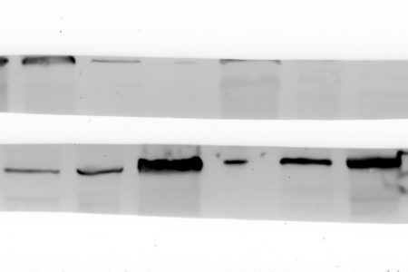 Western Blot with BioRad Protean 3 Cell